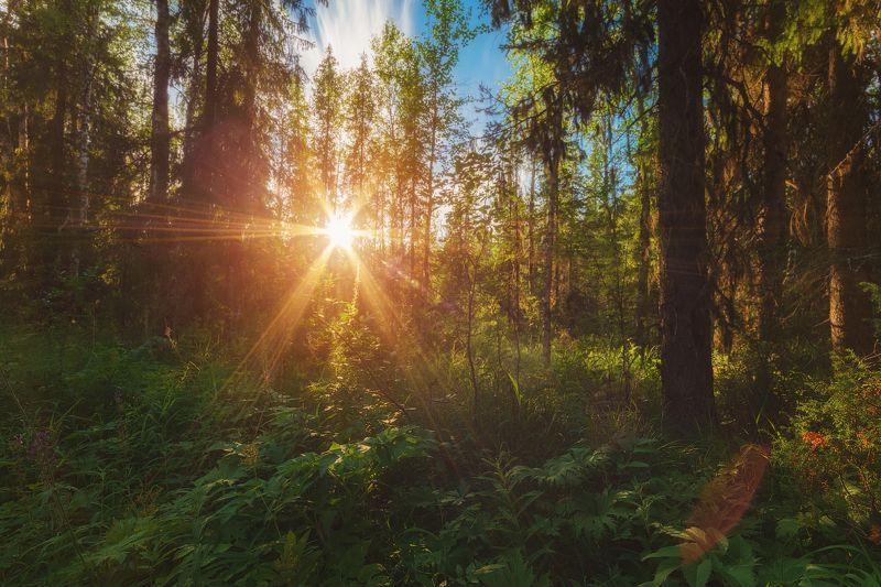 Солнце лесаphoto preview
