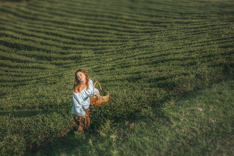 девушка чай плантации корзина собирает рыжая красиво ряды На чайных плантациях Юга Россииphoto preview