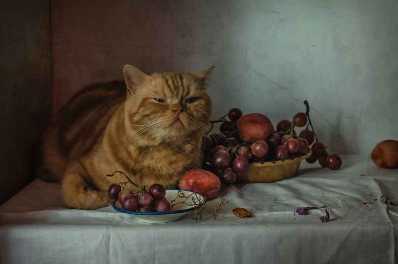 животные, кот, фрукты, виноград, сливы Кот и виноградphoto preview