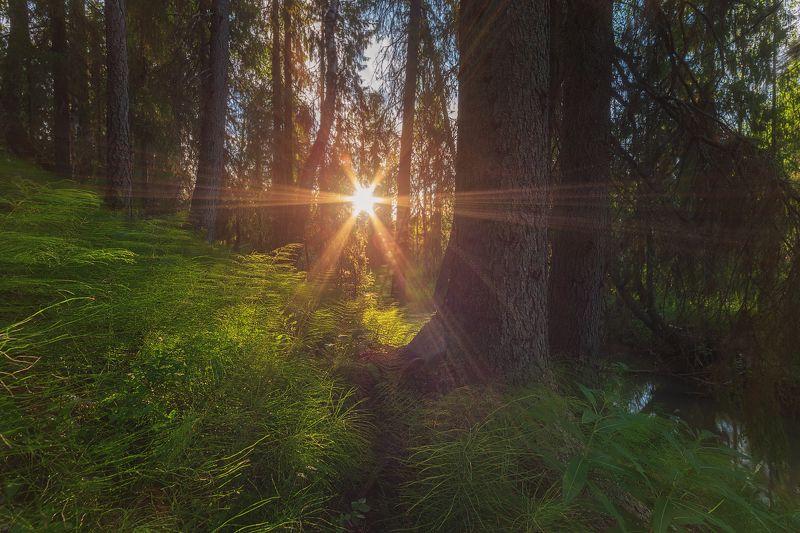 Запуталось Солнце..photo preview