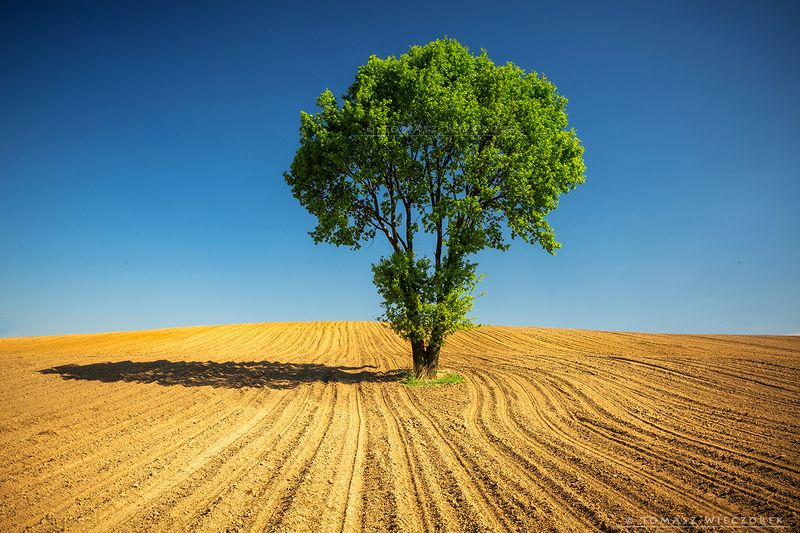poland, fields, sky, blue, loneliness, polish, landscape, tree, shadow, hot, warm, green, brown Lonelinessphoto preview