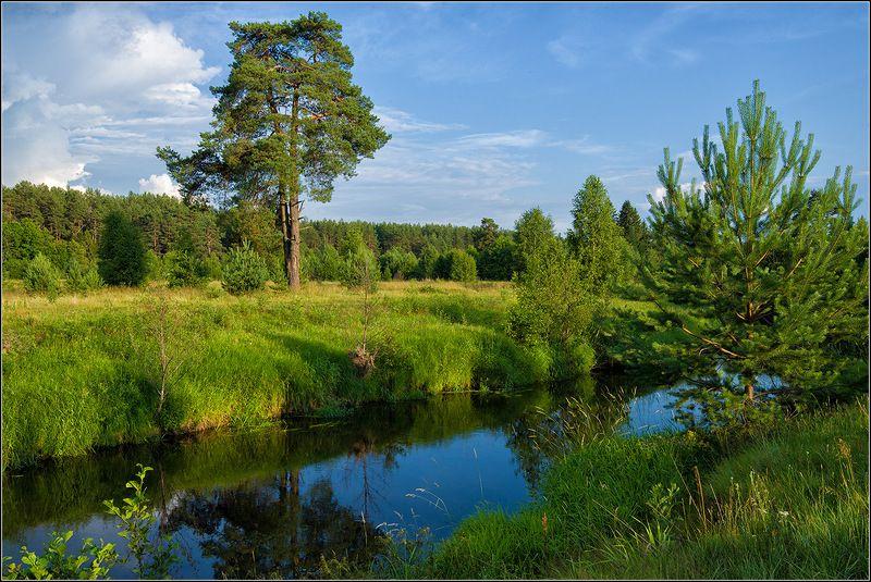 нижегородская область, лето, р. узола, сосны *  *  *photo preview