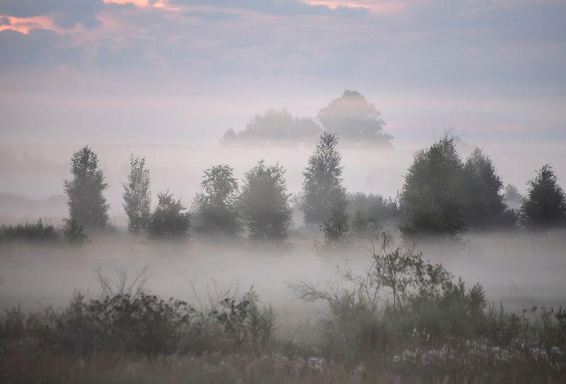мещёра, дорога, туман, поля, деревья, рязанская область Утро туманное … Утро седое?)photo preview