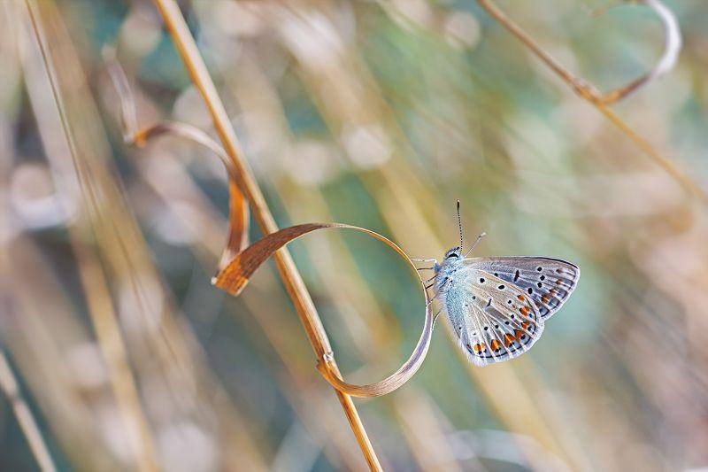 бабочка,ветка,цвет,красный,желтый,крылья ***photo preview