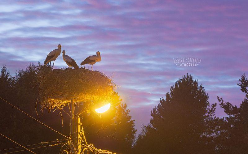дикий, аист, птенцы, закат, вечер 5 секунд спокойствияphoto preview