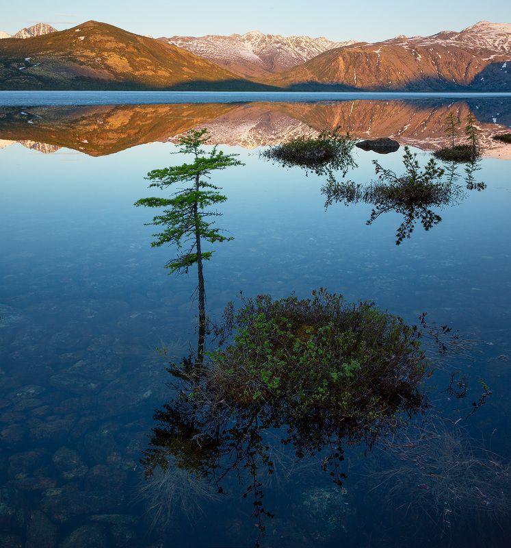 озеро, колыма, июнь, деревья, отражение, горы, рассвет, вода, берег, утро Колымские бонсаиphoto preview