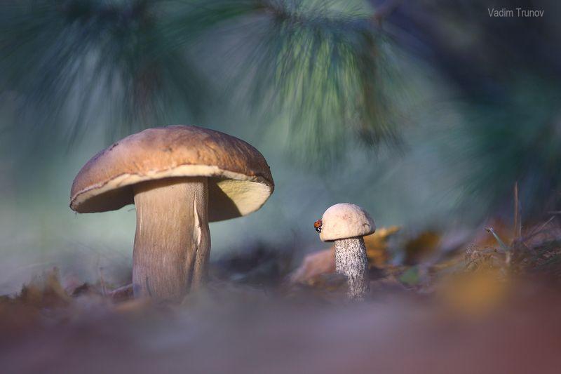 Жители лесаphoto preview