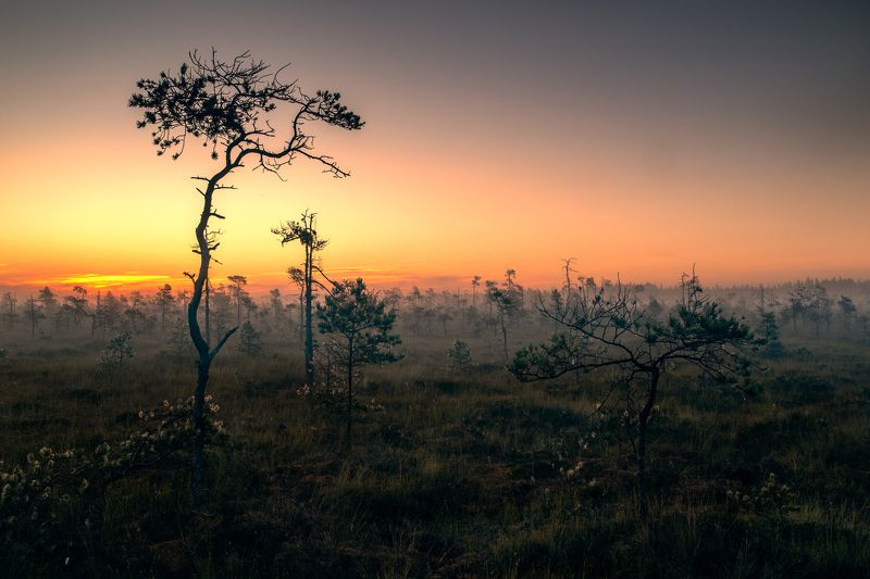 sunrise,trees,forest,colors,lithuania,travel,zeiss21mm zf.2, Утро в болотеphoto preview