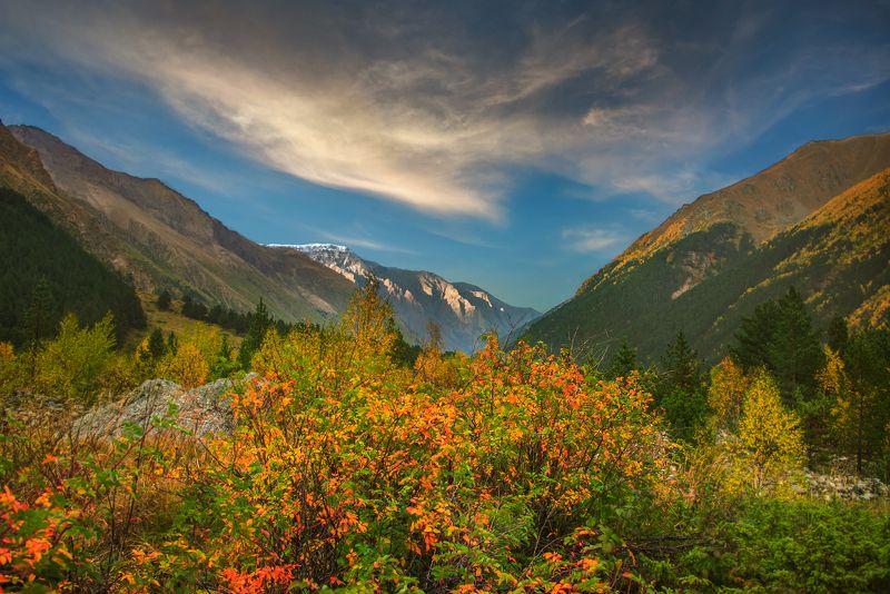 горы,осень,куст,листья Принарядился к осениphoto preview