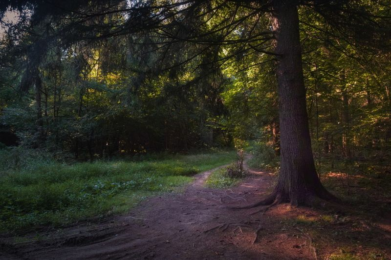 таинственный лес Август в лесуphoto preview