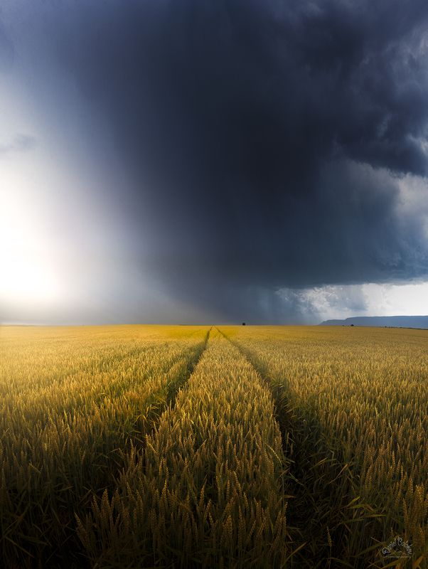 #thunder #cloud #rain #rainy #wheat #field #storm Thundercloudphoto preview