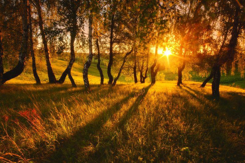 россия, московская область, зарайск, береза, восход солнца, рассвет, луг, лес, весна, роща, пейзаж, природа Подмосковьеphoto preview