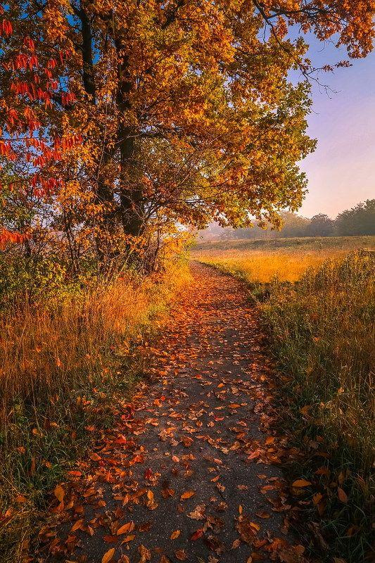 Дорожка в осеньphoto preview