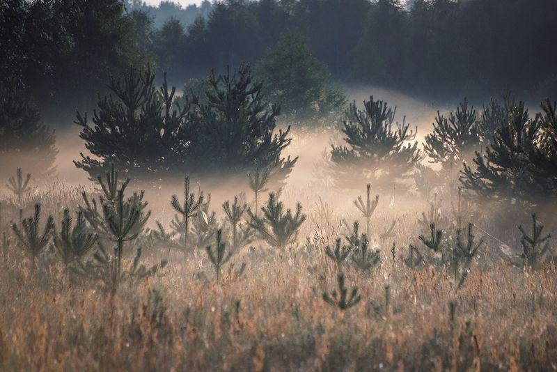 туман, утро, поле, сосны, мещёра, рязанская область Pro туманы крупным планом ...photo preview