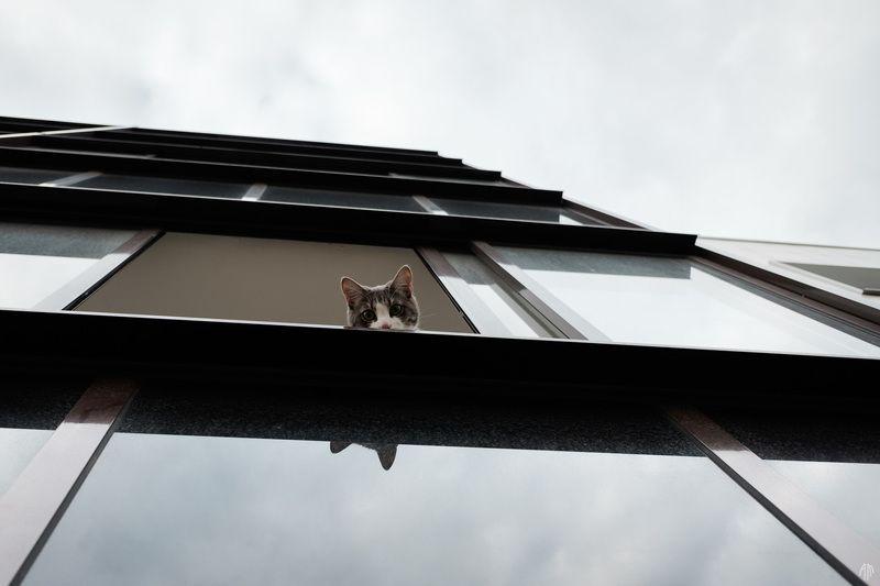 уличная фотография, streetphotography, Новая квартираphoto preview
