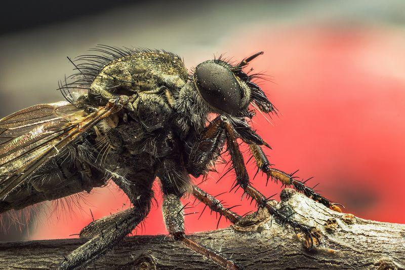 насекомое, макро, капли. Насекомоеphoto preview