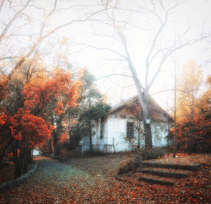 парк осень природа туман fog nature park lodge autumn В Парке.photo preview
