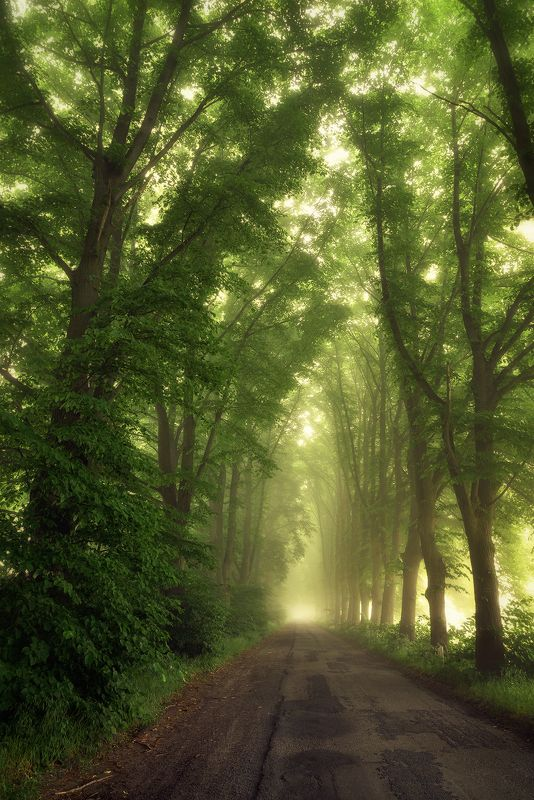 в туннеле tunnel nature magic mist foggy road path trees green poland dranikowski tunel в туннелеphoto preview