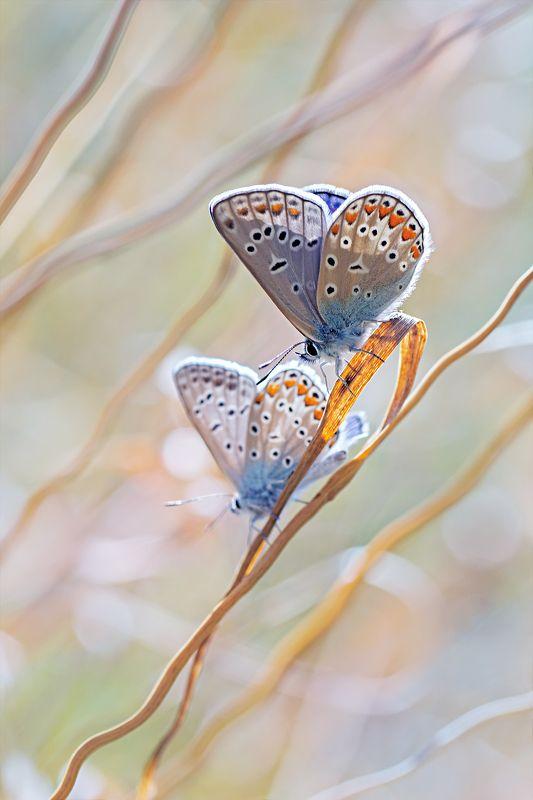 бабочка,ветка,цвет,красный,желтый,крылья Дуэт настроенияphoto preview