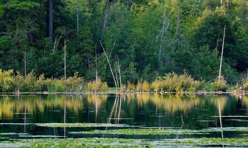 swamp, wood, trees, lake, reflection, sinset, болото, лес, деревья, озеро, отражение, закат Reflectionphoto preview