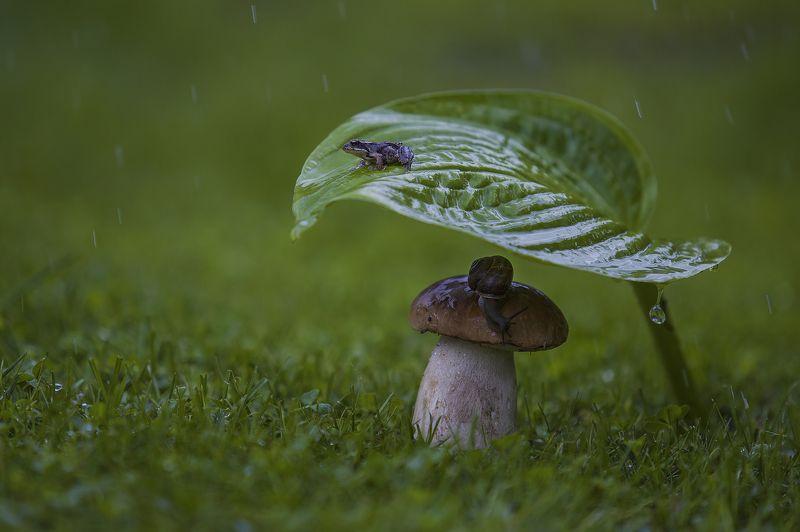 лягушка улитка гриб дождь макро ***photo preview