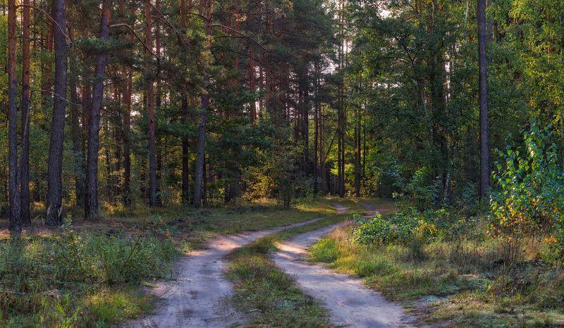 лес, утро, осень, Леснаяphoto preview