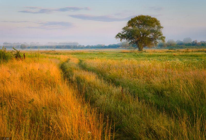 лето, утро, июль, туман, дерево, луг, травы, дорога, summer, tree, fog, july, morning, foggy, countryroad, view, meadow, grass летнее утро ..photo preview