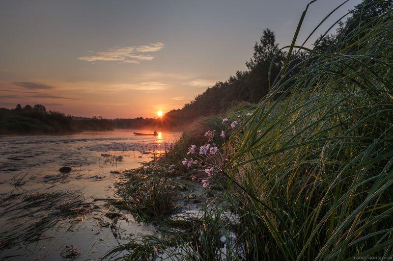 молога,река,утро,рассвет,лодка,пейзаж,природа,солнце,лодка,рыбак,роса,отражения,берег,трава, Утро на рекеphoto preview