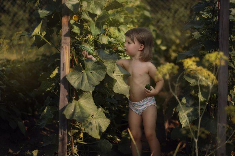ребенок огород огурцы урожай Пока бабуля не видит-сбор урожая.photo preview