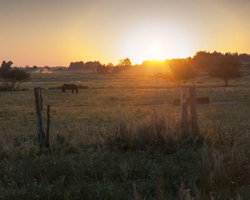 рассвет,деревня,лошадь,небо,благодать,лето Пасется лошадь на восходе!photo preview