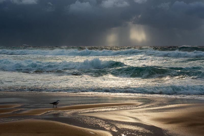 море, чайка, пляж, морской пейзаж, свет, рассвет Свет во Тьмеphoto preview