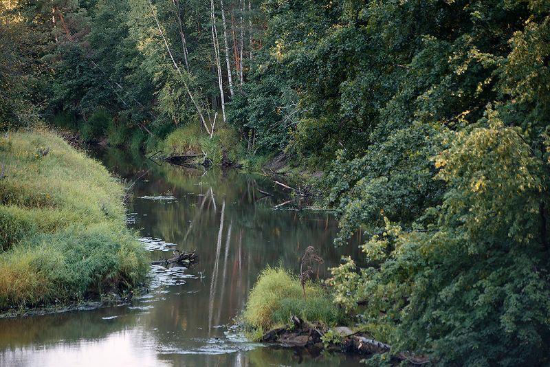 река, лес, лесная река, лето, летняя река, берега, высокий берег, обрыв, мещёра, рязанская область PROгулка у летней реки …photo preview
