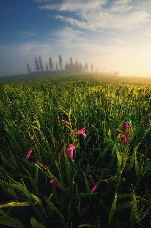Утро в Тосканеphoto preview