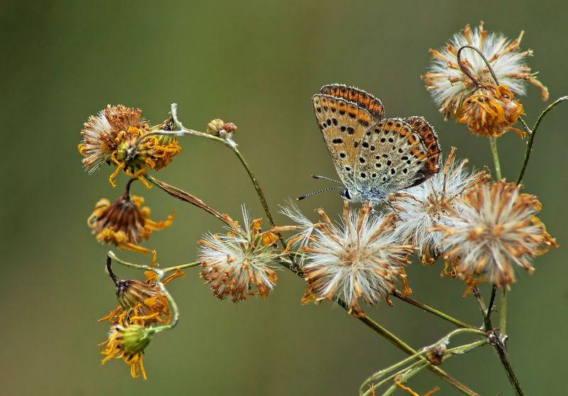 Бабочка Мягкая посадкаphoto preview