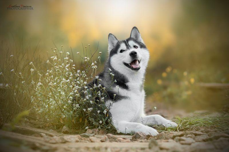 Собака-улыбыка:)photo preview