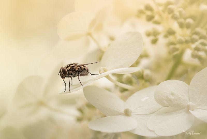 природа, бабочки, паучки, макро ... :)photo preview