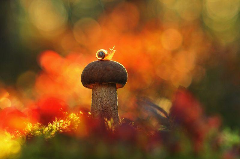 гриб, улитка, закат В краскахphoto preview