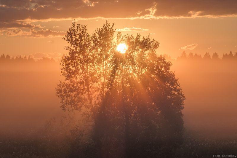 рассвет,утро,туман,лучи,дерево,лето,молога,восход,солнце Лучистое деревоphoto preview