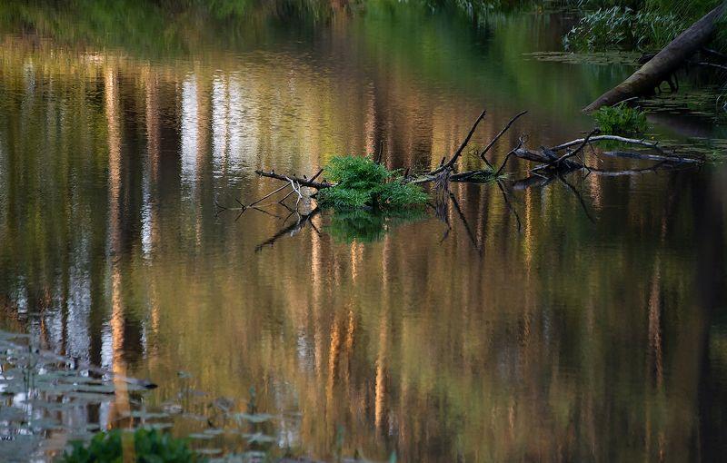 река, лес, отражения, лесная река, лето, летняя река, берега, высокий берег, обрыв, мещёра, рязанская область Мещёрская река крупным планомphoto preview