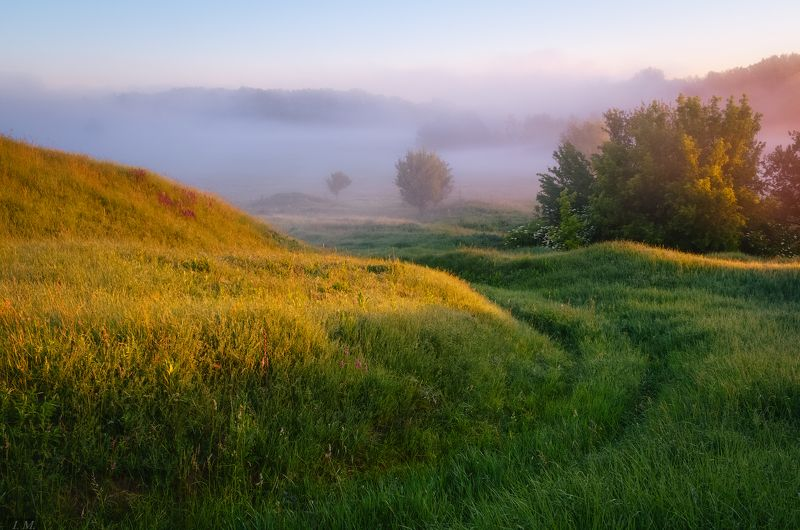 долина, лето, природа, свет, туман, утро, холмы, hills, misty, colors, valley, foggy, fog, grass, landscape, light, morning, nature, summer, ***photo preview