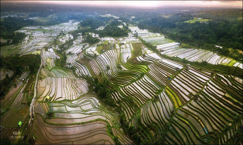 Индонезия, Бали, террасы, пейзаж, закат Рисовые террасы Бали..photo preview