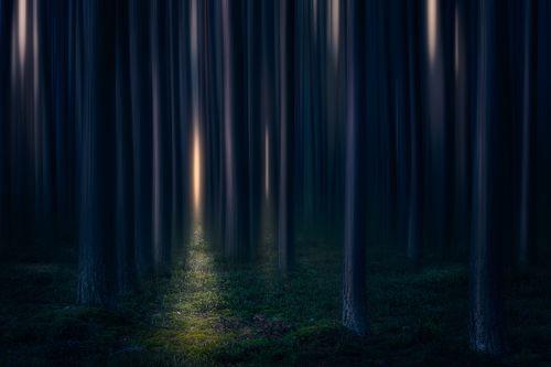 Fangorn forest...