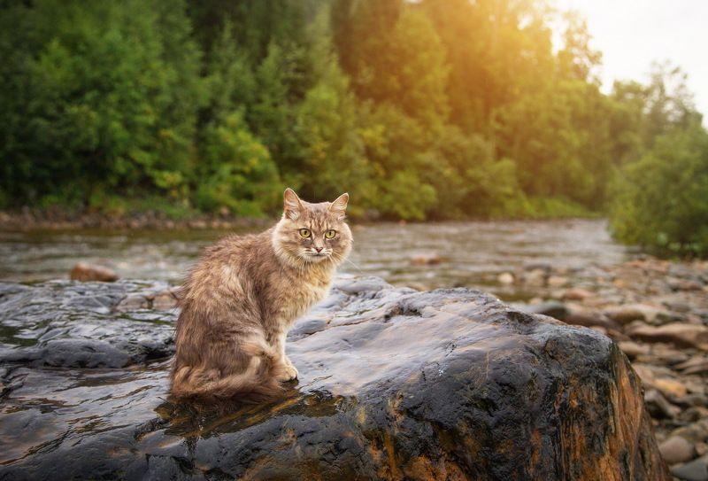 кот, природа, рыбалка, амзас \