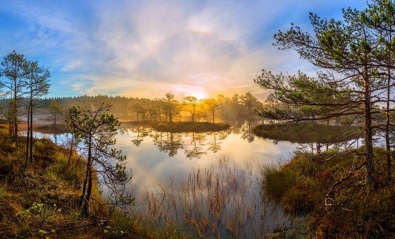 фототур, ленинградская область, деревья, сосна, болото, рассвет, осень, гало, туман, остров, отражение, покой Лёгкость чистого утраphoto preview