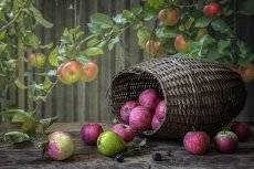 Вдогонку Яблочному Спасу