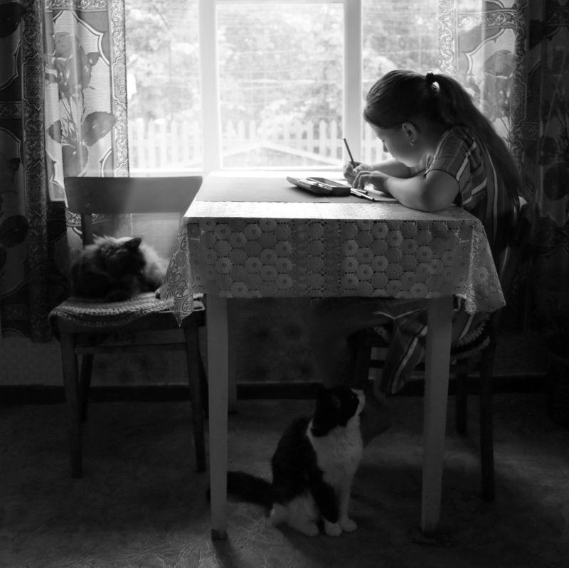 девочка, кошки, чернобелое фото, жанр Трио photo preview