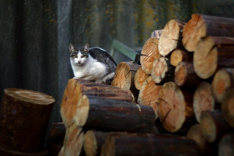 вечер кошка Вечерниеphoto preview