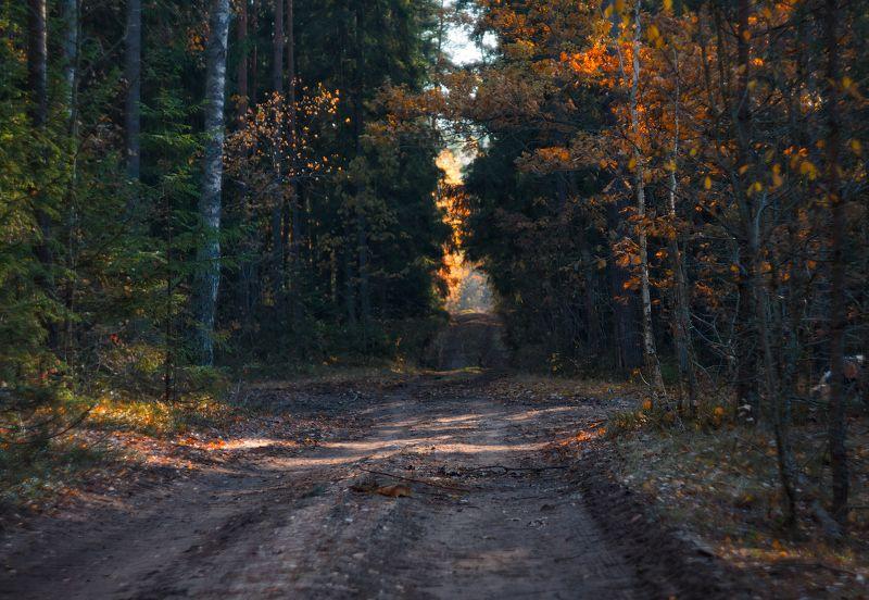 вечер, осень, лес, дорога, Фрагмент осениphoto preview