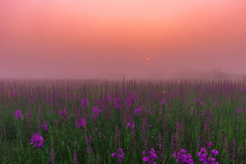 ямал ,природа ,рассвет, туман , салехард , янао , пейзаж \