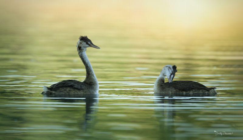 природа, лес, животные, птицы Семейноеphoto preview